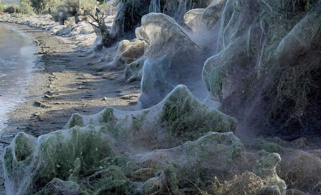 αράχνη άντρας που χρονολογείται δωρεάν sites γνωριμιών δεν πληρωμή πιστωτικής κάρτας